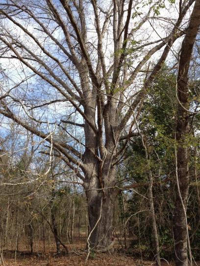 2013-10 Sacred Oak 1812